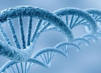 imagen de cadenas de ADN humano
